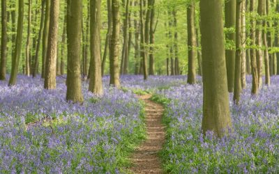 Ashridge Bluebell Photoshoot – What To Wear