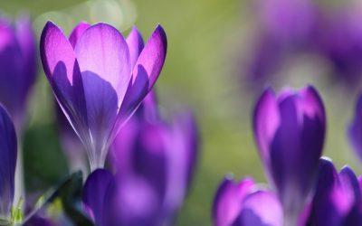 5 Flower Field Day Trips From Berkhamsted